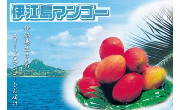 沖縄県伊江村(いえそん)「ふるさと納税」お礼品に『伊江島産 マンゴー約2kg(4~6玉)』を新たに追加いたしました。画像