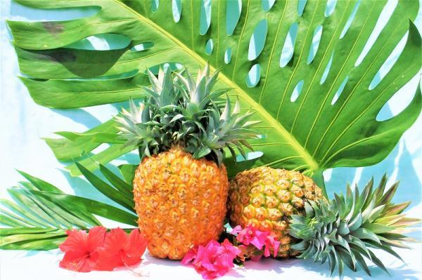沖縄県大宜味村(おおぎみそん)「ふるさと納税」お礼品に『マキシ農園パイナップル』を新たに追加いたしました画像