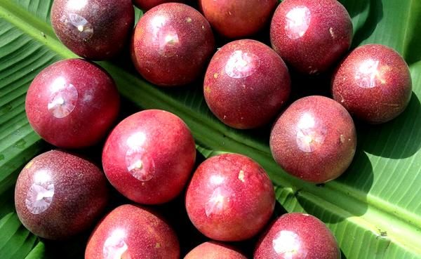 沖縄県北中城村(きたなかぐすくそん)「ふるさと納税」お礼品に『農薬・化学肥料不使用沖縄産「パッションフルーツ」』を新たに追加いたしました画像