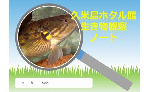 沖縄県久米島町(くめじまちょう)「ふるさと納税」お礼品に『【夏休み自由研究】久米島の生態調査隊!自分だけの観察ノートをつくろう』を新たに追加いたしました画像