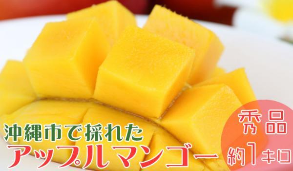 沖縄県沖縄市(おきなわし)「ふるさと納税」お礼品に『沖縄市で収穫!完熟アップルマンゴー約1kg(2~3玉)化粧箱』を新たに追加いたしました画像