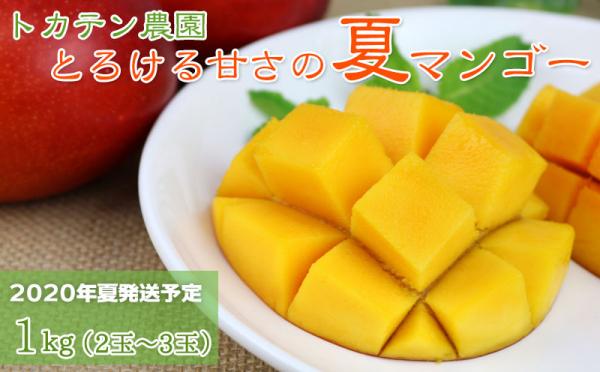 沖縄県南風原町(はえばるちょう)「ふるさと納税」お礼品に『【2020年発送】<トカテン農園>とろける甘さの夏マンゴー1kg』を新たに追加いたしました画像