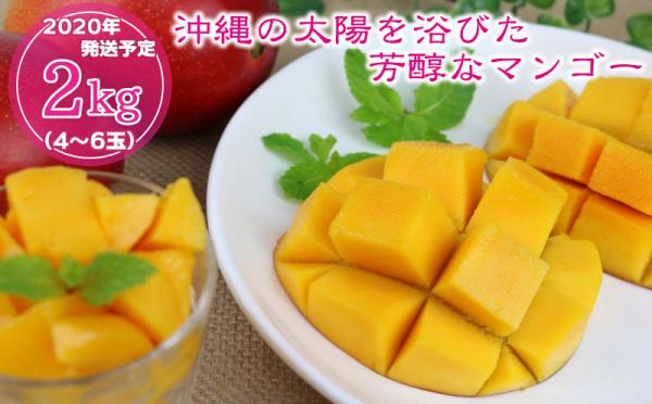 沖縄県糸満市(いとまんし)「ふるさと納税」お礼品に『【2020年発送】沖縄の太陽を浴びた芳醇なマンゴー2kg』を新たに追加いたしました画像