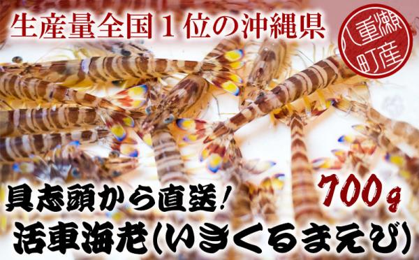 沖縄県八重瀬町(やえせちょう)「ふるさと納税」お礼品に『具志頭から直送!活車海老(いきくるまえび)【700g】』を新たに追加いたしました画像