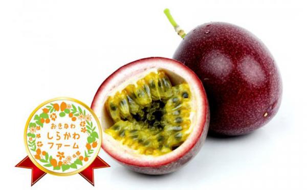 沖縄県八重瀬町(やえせちょう)「ふるさと納税」お礼品に『【2020年発送】しらかわファームパッションフルーツ約2Kg』を新たに追加いたしました画像