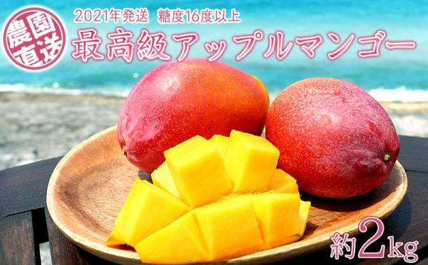 沖縄県大宜味村(おおぎみそん)「ふるさと納税」お礼品に『農園から直送する最高級アップルマンゴー!糖度16度以上 約2kg【2021年発送】』を新たに追加いたしました画像
